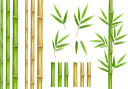 бамбук, бамбук с листьями, зеленое растение, bamboo, bamboo with leaves, green plant, bambus, bambus mit blättern, grüne pflanze, bambou, bambou avec feuilles, plante verte, bambú, bambú con hojas, bambù, bambù con foglie, pianta verde, bambu, bambu com folhas, planta verde, бамбук з листям, зелена рослина