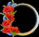 цветочная рамка, рамка для фотошопа, цветы, flower frame, frame for photoshop, flowers, blumenrahmen, rahmen für photoshop, blumen, cadre fleur, cadre pour photoshop, fleurs, marco de flores, marco para photoshop, cornice floreale, cornice per photoshop, fiori, quadro de flores, quadro para photoshop, flores, квіткова рамка, рамка для фотошопу, квіти, красные маки