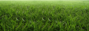 зеленое поле, зеленая трава, зеленое растение, green grass, green plant, grünes gras, grünpflanze, herbe verte, plante verte, hierba verde, erba verde, pianta verde, grama verde, planta verde