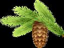 ветка ёлки, еловая шишка, новый год, ёлка, новогоднее украшение, зеленое растение, ветка дерева, хвоя, christmas tree branch, fir cone, new year, christmas tree, christmas decoration, green plant, tree branch, needles, weihnachtsbaumast, tannenzapfen, neues jahr, weihnachtsbaum, weihnachtsdekoration, grünpflanze, baumast, nadeln, branche d'arbre de noël, cône de sapin, nouvel an, arbre de noël, décoration de noël, plante verte, branche d'arbre, aiguilles, rama de árbol de navidad, cono de abeto, año nuevo, árbol de navidad, decoración navideña, rama de árbol, agujas, filiale dell'albero di natale, cono di abete, nuovo anno, albero di natale, decorazione di natale, pianta verde, ramo di un albero, aghi, galho de árvore de natal, cone de abeto, ano novo, árvore de natal, decoração de natal, planta verde, galho de árvore, agulhas, гілка ялинки, новий рік, шишка, ялинка, новорічна прикраса, зелена рослина, гілка дерева