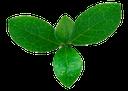 листья мяты, веточка зеленой мяты, мята, зеленый лист, mint leaves, sprig of green mint, mint, green leaf, ein zweig minze grün, minze, grünes blatt, feuilles de menthe, un brin de menthe verte, menthe, feuille verte, hojas de menta, una ramita de menta verde, hojas verdes, foglie di menta, un rametto di menta verde, menta, foglia verde, folhas de hortelã, um raminho de hortelã verde, hortelã, folha verde
