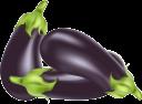 баклажан, бахчевая культура, синий баклажан, овощи, eggplant, melon culture, blue eggplant, vegetables, melonenkultur, blaue aubergine, gemüse, aubergine, culture de melon, aubergine bleue, légumes, berenjena, cultivo de melón, berenjena azul, verduras, melanzane, melone, melanzane blu, verdure, berinjela, cultura de melão, berinjela azul, vegetais, баштанна культура, синій баклажан, овочі