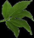 зеленый лист, ветка дерева, зеленое растение, зеленый, green leaf, branch of a tree, green plant, green, grünes blatt, zweig eines baumes, grüne pflanze, grün, feuille verte, branche d'un arbre, plante verte, verte, hoja verde, rama de un árbol, foglia verde, ramo di un albero, pianta verde, folha verde, ramo de uma árvore, planta verde, verde, зелений лист, гілка дерева, зелена рослина, зелений