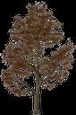 лиственное дерево, зеленое растение, природа, deciduous tree, green plant, laubbaum, grüne pflanze, natur, arbre à feuilles caduques, plante verte, nature, árbol de hoja caduca, naturaleza, albero a foglie decidue, pianta verde, la natura, árvore de folha caduca, planta verde, natureza, листяне дерево, зелена рослина