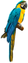 фауна, птицы, попугай, bird, parrot, vogel, papagei, faune, oiseau, perroquet, pájaro, loro, uccello, pappagallo, fauna, pássaro, papagaio