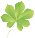 лист каштана, leaf of a chestnut, зеленый лист, green leaf, leaf of a tree, kastanienblatt, grünes blatt, natur, baum, blatt, feuille châtaigne, vert feuille, nature, feuille d'arbre, el castaño de hoja, hoja verde, naturaleza, hoja del árbol, foglie di castagno, foglia verde, natura, albero foglia, castanha folha, folha verde, natureza, folha da árvore, зелений лист, природа, лист дерева
