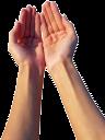 рука, кисть руки, жест, пальцы, часть тела, ладонь, открытая ладонь, пальцы руки, ладони вместе
