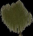ива, лиственное дерево, зеленое растение, willow, deciduous tree, green plant, weide, ein laubbaum, grünpflanze, saule, un arbre à feuilles caduques, plante verte, sauce, un árbol de hoja caduca, las plantas verdes, salice, un albero deciduo, pianta verde, salgueiro, uma árvore de folha caduca, planta verde, верба, зелена рослина, листяне дерево
