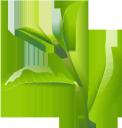 зеленый лист, лист растения, лист дерева, листья, флора, листок, зеленый, grünes blatt, blatt einer pflanze, blatt eines baumes, blatt, blätter, grün, feuille verte, feuille d'une plante, feuille d'un arbre, feuille, flore, feuilles, vert, hoja verde, hoja de una planta, hoja de un árbol, hoja, hojas, foglia verde, foglia di una pianta, foglia di un albero, foglia, foglie, folha verde, folha de uma planta, folha de uma árvore, folha, flora, folhas, verde, зелений лист, лист рослини, листя, зелений