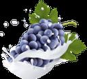 фрукты в молоке, фруктовый йогурт, брызги молока, гроздь винограда, синий виноград, fruit in milk, fruit yogurt, spray of milk, grapes, bunch of grapes, blue grapes, früchte in milch, fruchtjoghurt, milchspray, trauben, weintrauben, blaue trauben, fruits au lait, yaourt aux fruits, spray de lait, raisins, grappe de raisin, raisin bleu, fruta en leche, yogurt de fruta, spray de leche, uvas, racimo de uvas, uvas azules, frutta nel latte, yogurt alla frutta, spruzzi di latte, uva, grappolo d'uva, uva blu, фрукти в молоці, фруктовий йогурт, бризки молока, виноград, гроно винограду, синій виноград