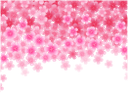 флора, весна, цветы, распустившийся цветок, spring, flowers, blown flower, frühling, blumen, geblasen blume, flore, printemps, fleurs, fleur soufflé, flor abierta, fiori, fiore soffiato, flora, primavera, flores, flor soprado
