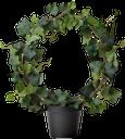 плющ, вазон, комнатное растение, зеленая листва, зеленое растение, лиана, ivy, vase, houseplant, green foliage, green plant, vine, efeu, blumentopf, zimmerpflanze, grüne blätter, grüne pflanze, rebe, lierre, fleurs, plantes d'intérieur, feuillage vert, plante verte, vigne, hiedra, maceta, planta de interior, follaje verde, vid, edera, vaso di fiori, pianta d'appartamento, fogliame verde, pianta verde, vite, hera, flowerpot, planta de casa, folhagem verde, planta verde, videira, кімнатна рослина, зелене листя, зелена рослина, ліана