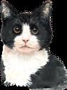 кот, черный кот, кошка, домашние животные, фауна, black cat, cat, pets, schwarze katze, katze, haustiere, chat noir, chat, animaux domestiques, faune, gato negro, mascotas, gatto nero, gatto, animali domestici, gato preto, gato, animais de estimação, fauna, кіт, чорний кіт, кішка, домашні тварини