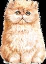 кот, рыжий кот, кошка, домашние животные, фауна, ginger cat, cat, pets, ingwerkatze, katze, haustiere, chat roux, chat, animaux domestiques, faune, jengibre gato, mascotas, gatto zenzero, gatto, animali domestici, gato ruivo, gato, animais de estimação, fauna, кіт, рудий кіт, кішка, домашні тварини