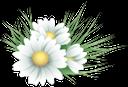 цветы, зеленая трава, flowers, green grass, chamomile, spring, blumen, grünes gras, kamille, frühling, flore, fleurs, herbe verte, camomille, ressort, hierba verde, manzanilla, fiori, erba verde, camomilla, la primavera, flora, flores, grama verde, camomila, primavera, флора, квіти, зелена трава, ромашка, весна