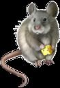 фауна, животные, грызун, серая мышь, rodent, gray mouse, tier, nagetier, graue maus, faune, rongeur, souris grise, ratón gris, animale, roditore, grigio topo, fauna, animal, roedor, rato cinzento