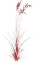 куст красной травы с колосками, зеленое растение, трава, bush of red grass with spikelets, green plant, grass, strauch mit roten gras ährchen, grüne pflanze gras, buisson avec épillets herbe rouge, herbe plante verte, arbusto con espiguillas hierba de color rojo, planta de hierba verde, cespuglio con spighette erba rossa, pianta verde erba, arbusto com spikelets grama vermelhas, planta grama verde