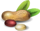 арахис, земляной орех, орехи, peanuts, nuts, erdnüsse, nüsse, arachides, cacahuètes, noix, cacahuetes, nueces, arachidi, noci, amendoim, nozes, арахіс, земляний горіх, горіхи