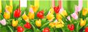 тюльпан, цветы, красный тюльпан, желтый тюльпан, красный цветок, желтый цветок, флора, весна, tulip, flowers, red tulip, yellow tulip, red flower, yellow flower, spring, tulpe, blumen, rote tulpe, gelbe tulpe, rote blume, gelbe blume, frühling, tulipe, fleurs, tulipe rouge, tulipe jaune, fleur rouge, fleur jaune, flore, printemps, tulipán, tulipán rojo, tulipán amarillo, flor roja, flor amarilla, tulipano, fiori, tulipano rosso, tulipano giallo, fiore rosso, fiore giallo, tulipa, flores, tulipa vermelha, tulipa amarela, flor vermelha, flor amarela, flora, primavera, квіти, червоний тюльпан, жовтий тюльпан, червона квітка, жовта квітка
