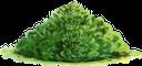 куст, зеленый куст, зеленое растение, садовый куст, растительность, bush, green bush, green plant, garden bush, busch, grüner busch, grüne pflanze, gartenbusch, vegetation, buisson, buisson vert, plante verte, buisson de jardin, végétation, arbusto de jardín, vegetación, cespuglio, cespuglio verde, pianta verde, cespuglio del giardino, vegetazione, arbusto, arbusto verde, planta verde, arbusto de jardim, vegetação, кущ, зелений кущ, зелена рослина, садовий кущ, рослинність