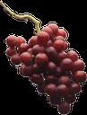 спелый виноград, гроздь винограда, красный виноград, виноделие, виноградные ягоды, ripe grapes, a bunch of grapes, red grapes, winemaking, grape berries, reife trauben, weintraube, roten trauben, wein, weinbeeren, raisins mûrs, grappe de raisin, raisins rouges, le vin, les baies de raisin, racimo de uvas, uvas rojas, bayas de uva, uva matura, grappolo d'uva, uva rossa, vino, acini d'uva, uvas maduras, cacho de uvas, uvas vermelhas, vinho, bagas de uva