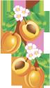 абрикос, ветка абрикоса, косточка абрикоса, желтый, aprikose, aprikosenzweig, aprikosenstein, gelb, abricot, abricot branche, abricot pierre, jaune, albaricoque, rama de albaricoque, piedra de albaricoque, amarillo, albicocca, ramo di albicocca, pietra di albicocca, giallo, alperce, ramo de damasco, damasco, amarelo, гілка абрикосу, кісточка абрикосу, жовтий
