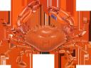 краб, морепродукты, еда, морская фауна, crab, seafood, food, marine life, krabben, meeresfrüchte, lebensmittel, meereslebewesen, crabe, fruits de mer, nourriture, vie marine, cangrejo, mariscos, vida marina, granchio, frutti di mare, cibo, vita marina, caranguejo, frutos do mar, comida, vida marinha, морепродукти, їжа, морська фауна