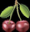 вишня, красная ягода, ягода вишни, красный, cherry, red berry, cherry blossom, red, kirsche, rote beere, kirschblüte, rot, cerise, baie rouge, fleur de cerisier, rouge, cereza, baya roja, flor de cerezo, rojo, ciliegia, bacca rossa, fiore di ciliegio, rosso, cereja, baga vermelha, flor de cerejeira, vermelho, червона ягода, ягода вишні, червоний
