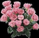 флора, букет цветов, розовые цветы, букет роз, роза, bouquet of flowers, pink flowers, bouquet of roses, blumenstrauß, rosa blüten, strauß rosen, rosen, flore, bouquet de fleurs, fleurs roses, bouquet de roses, roses, ramo de flores, flores rosadas, ramo de rosas, bouquet di fiori, fiori rosa, bouquet di rose, rose, flora, buquê de flores, flores cor de rosa, buquê de rosas, rosas