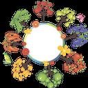 дерево, баннер, овощи, фруктовое дерево, фрукты, чистый лист, груша, горох, баклажан, морковь, сладкий перец, помидор, яблоко, tree, vegetables, fruit tree, pure leaf, carrots, sweet pepper, tomato, pear, apple, peas, eggplant, baum, gemüse, obstbaum, obst, reines blatt, karotten, paprika, birne, apfel, erbsen, auberginen, arbre, bannière, légumes, arbre fruitier, fruit, feuille pure, carottes, poivron, poire, pomme, pois, aubergine, árbol, banner, verduras, árbol frutal, fruta, hoja pura, zanahorias, pimiento, manzana, guisantes, berenjena, albero, bandiera, verdura, albero da frutto, frutta, foglia pura, carote, peperone dolce, pomodoro, pera, mela, piselli, melanzane, árvore, bandeira, legumes, árvore de fruta, fruto, folha pura, cenouras, pimentão, tomate, pêra, ervilhas, berinjela, банер, овочі, фруктове дерево, фрукти, чистий аркуш, морква, солодкий перець, помідор, яблуко