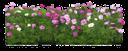 цветущая петуния, петуния, цветы, клумба цветов, blossoming petunia, petunia, flowers, flower bed, blühenden petunien, petunien, blumen, blumenbeet, floraison pétunia, pétunias, fleurs, lit de fleurs, floración petunia, petunias, la fioritura petunia, petunie, fiori, aiuola, floração petúnia, petúnias, flores, cama de flor
