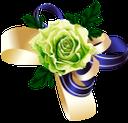зеленая роза, цветок розы, бутон розы, цветы, роза, зеленое растение, green rose, rose flower, rosebud, flowers, green plant, grüne rose, rosenblüte, rosenknospe, blumen, grüne pflanze, rose verte, fleur rose, bouton de rose, fleurs, flore, rose, plante verte, rosa flor, capullo de rosa, fiore rosa, bocciolo di rosa, fiori, pianta verde, rosa verde, flor rosa, botão de rosa, flores, flora, rosa, planta verde, зелена троянда, квітка троянди, бутон троянди, квіти, флора, троянда, зелена рослина