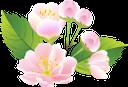 флора, весна, цветы, распустившийся цветок, зеленый лист, spring, flowers, blown flower, green leaf, frühling, blumen, geblasen blume, grünes blatt, flore, printemps, fleurs, fleur soufflé, feuille verte, flor abierta, la hoja verde, fiori, fiore soffiato, verde foglia, flora, primavera, flores, flor soprado, folha verde