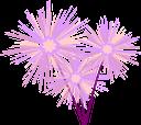 цветы, одуванчик, флористика, флора, flowers, dandelion, floristry, blumen, löwenzahn, floristik, fleurs, pissenlit, fleuristerie, flore, diente de león, floristería, fiori, dente di leone, floristica, flores, dente de leão, produtos de floricultura, flora, квіти, кульбаба
