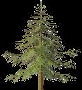 зеленая ёлка, новогодняя ёлка, пушистая ёлка, вечнозеленое дерево, хвоя, новый год, a green christmas tree, a christmas tree, a furry tree, an evergreen tree, needles, a new year, grünen baum, weihnachtsbaum, flauschigen baum, immergrüner baum, nadeln, neujahr, arbre vert, arbre de noël, arbre pelucheux, arbre à feuilles persistantes, aiguilles, nouvelle année, árbol verde, árbol de navidad, árbol esponjoso, árbol de hoja perenne, agujas, año nuevo, albero verde, albero di natale, albero soffice, albero sempreverde, aghi, nuovo anno, árvore de natal, árvore macio, árvore verde, agulhas, ano novo