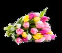 тюльпан, букет тюльпанов, tulip, bouquet of tulips, tulpe, strauß tulpen, tulipe, bouquet de tulipes, tulipán, ramo de tulipanes, tulipano, bouquet di tulipani, tulipa, buquê de tulipas
