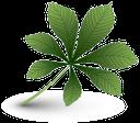 лист каштана, зеленый лист, каштан, chestnut leaf, green leaf, chestnut, blatt der kastanie, grünes blatt, kastanie, feuille de châtaignier, feuille verte, marron, hoja de castaña, hoja verde, castaño, foglie di castagno, foglia verde, di castagno, folha de castanha, folha verde, castanha