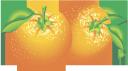 апельсин, фрукты, оранжевый, frucht, fruit, orange, naranja, frutta, arancia, fruta, laranja, фрукти, помаранчевий