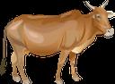 парнокопытные, животные фермы, животноводство, cow, animal farms, animal husbandry, kuh, artiodactyls, tierfarmen, tierhaltung, vache, artiodactyles, élevages, élevage, vaca, artiodáctilos, granjas de animales, ganadería, mucca, artiodattili, allevamenti di animali, allevamento, корова, парнокопитні, тварини ферми, тваринництво