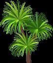 пальма, тропическое растение, зеленое растение, дерево, флора, palm tree, tropical plant, green plant, tree, palme, tropische pflanze, grüne pflanze, baum, palmier, plante tropicale, plante verte, arbre, flore, palmera, árbol, palma, pianta tropicale, pianta verde, albero, palmeira, planta tropical, planta verde, árvore, flora, тропічна рослина, зелена рослина