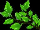 листья, зеленый лист, зеленое растение, ветка с листьями, leaves, green leaf, green plant, branch with leaves, blätter, grünes blatt, grüne pflanze, zweig mit blättern, feuilles, feuille verte, plante verte, branche avec des feuilles, hojas, hoja verde, rama con hojas, foglie, foglia verde, pianta verde, ramo con foglie, folhas, folha verde, planta verde, ramo com folhas, листя, зелений лист, зелена рослина, гілка з листям