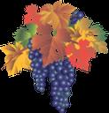 виноград, синий виноград, гроздь винограда, желтая листва, осень, grapes, blue grapes, a bunch of grapes, yellow foliage, autumn, blaue trauben, trauben, gelbe blätter, herbst, raisins, raisins bleus, raisin, feuillage jaune, automne, uvas de color azul, follaje amarillo, otoño, uva blu, foglie di colore giallo, autunno, uvas, uvas azuis, uva, folhagem amarela, outono, синій виноград, гроно винограду, жовте листя, осінь