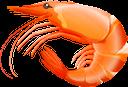 креветка, морепродукты, еда, морская фауна, shrimp, seafood, food, marine life, garnelen, meeresfrüchte, lebensmittel, meereslebewesen, crevettes, fruits de mer, nourriture, vie marine, camarones, mariscos, vida marina, gamberetti, frutti di mare, cibo, vita marina, camarão, frutos do mar, comida, vida marinha, морепродукти, їжа, морська фауна