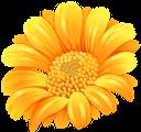 желтый цветок, цветы, флора, yellow flower, flowers, gelbe blume, blumen, fleur jaune, fleurs, flore, flor amarilla, fiore giallo, fiori, flor amarela, flores, flora, жовта квітка, квіти