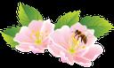 флора, весна, цветы, цветущая вишня, зеленый лист, spring, flowers, cherry blossoms, green leaf, frühling, blumen, kirschblüten, grünes blatt, flore, printemps, fleurs, fleurs de cerisier, feuille verte, flores de cerezo, la hoja verde, fiori, fiori di ciliegio, verde foglia, flora, primavera, flores, flores de cerejeira, folha verde, пчела