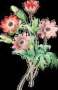 красный цветок, полевой цветок, цветы, полевые цветы, зеленое растение, природа, флора, red flower, wildflower, flowers, wildflowers, green plant, rote blume, wildblume, blumen, wildblumen, grüne pflanze, natur, fleur rouge, fleurs, fleurs sauvages, plante verte, nature, flore, flor roja, naturaleza, fiore rosso, fiore di campo, fiori, fiori di campo, pianta verde, natura, flor vermelha, flores, flores silvestres, planta verde, natureza, flora, червона квітка, польова квітка, квіти, польові квіти, зелена рослина
