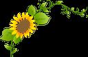 подсолнух, цветок подсолнуха, желтый цветок, зеленое растение, полевые цветы, флора, sunflower, sunflower flower, yellow flower, green plant, sonnenblume, sonnenblumenblume, gelbe blume, grünpflanze, tournesol, fleur de tournesol, fleur jaune, plante verte, fleurs sauvages, flore, girasol, flor de girasol, flor amarilla, flores silvestres, girasole, fiore di girasole, fiore giallo, pianta verde, fiori di campo, girassol, flor girassol, flor amarela, planta verde, wildflowers, flora, соняшник, квітка соняшника, жовта квітка, зелена рослина, польові квіти