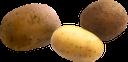 картофель, картошка, продукты питания, зеленое растение, овощи, еда, potatoes, green plant, vegetables, food, kartoffeln, grüne pflanze, gemüse, lebensmittel, pommes de terre, plante verte, légumes, nourriture, patatas, verduras, patate, pianta verde, verdure, cibo, batatas, planta verde, vegetais, comida, картопля, продукти харчування, зелена рослина, овочі, їжа