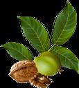 грецкий орех, ветка ореха, орехи, walnut, walnut branch, nuts, walnuss, walnusszweig, nüsse, noyer, branche de noix, les noix, nogal, rama de nogal, nueces, noce, ramo di noce, noci, noz de ramo, nozes, волоський горіх, гілка горіха, горіхи