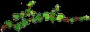 лиана, растение плющ, вьющийся зеленый плющ, liana, plant ivy, curly green ivy, wein, efeu pflanze, klettern grünen efeu, vigne, plante de lierre, lierre grimpant vert, vid, planta de hiedra, hiedra verde, vite, pianta di edera, arrampicata edera verde, videira, planta hera, escalada hera verde, amarillo de la hoja de arce, árbol de la hoja de arce, otoño, hoja de arce, arce rojo, giallo foglia d'acero, albero foglia d'acero, autunno, foglia d'acero, acero rosso, canada, folha amarela bordo, árvore folha de bordo, outono, folha de bordo, bordo vermelho, canadá